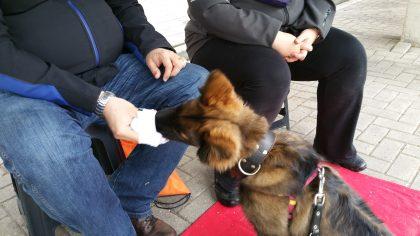 hersenwerk honden