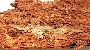 houtwormbestrijding breda